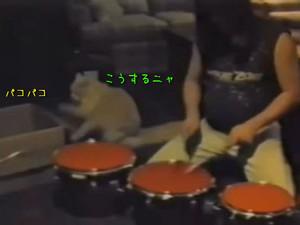 Labaq_drumer_cat_master_6c489072