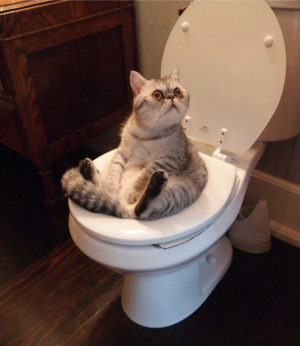 Byoukansunday_cat_toilet_77b080a9s