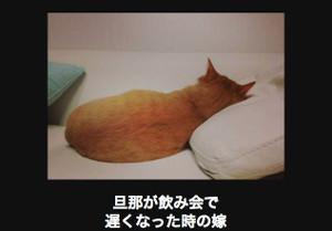 Cello1119cc_tumblr_nvxwekunwu1qieio