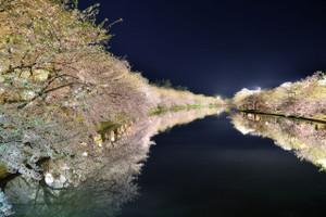 Hirosaki_cherry_6tpflhe