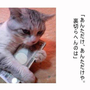Cello1119cc_tumblr_o53n0q0rfr1qieio